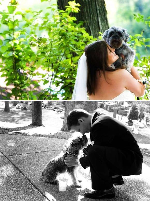 dogs-weddings-puppy-love-1