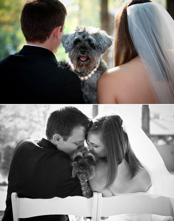 puppy-love-lola-darci-with-this-ring-dog
