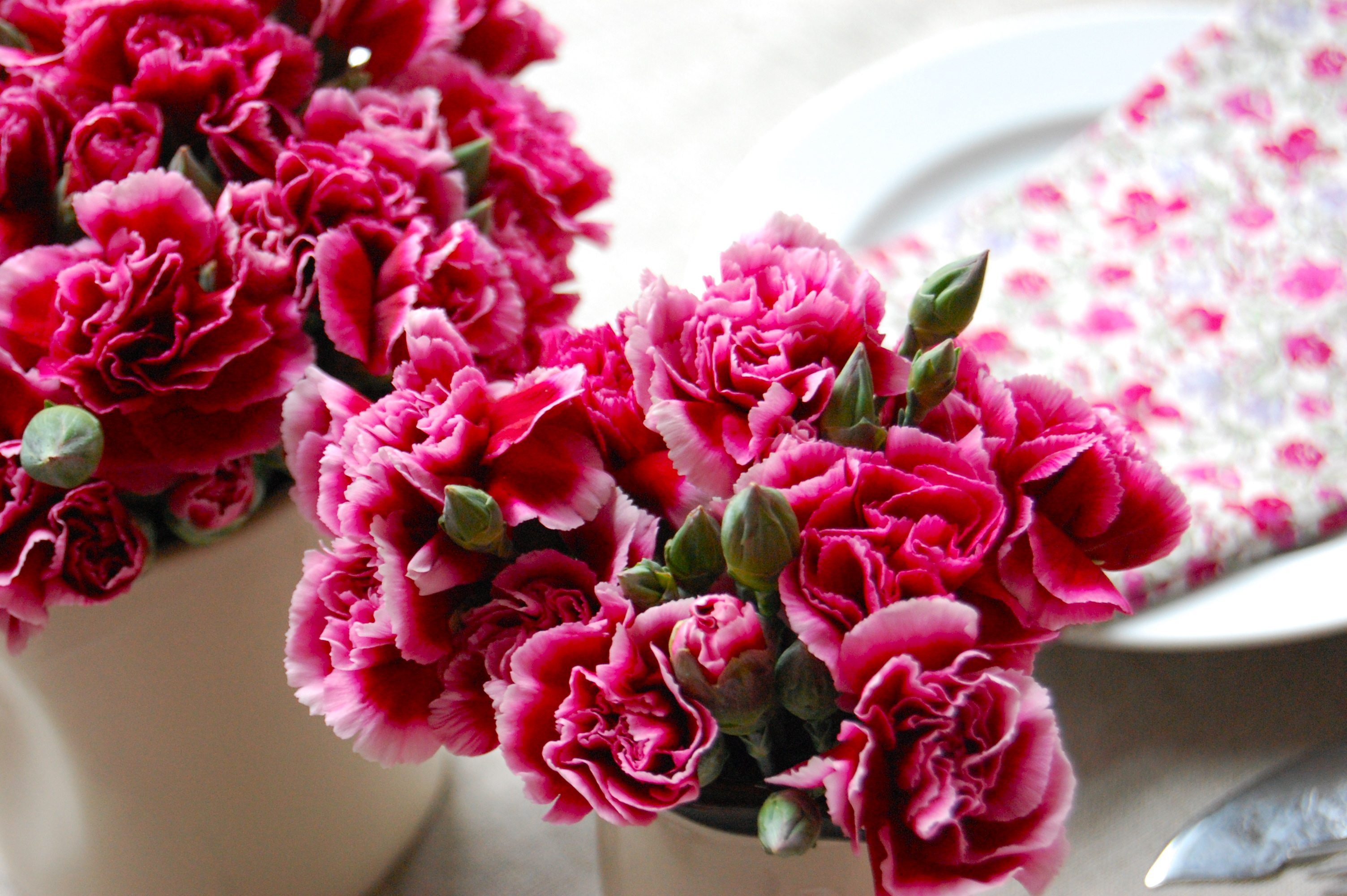 1000 images about Carnation Miniature Wedding Flowers on Pinterest