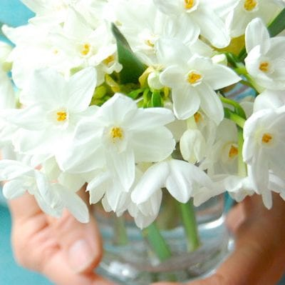 Pretty Paper Whites and Teal Ribbon thumbnail