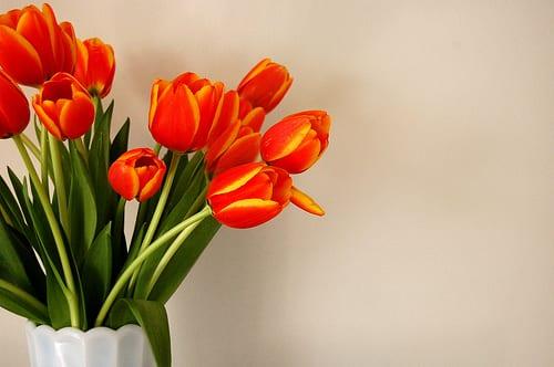 orange-tulips-bouquet-milk-glass-vase