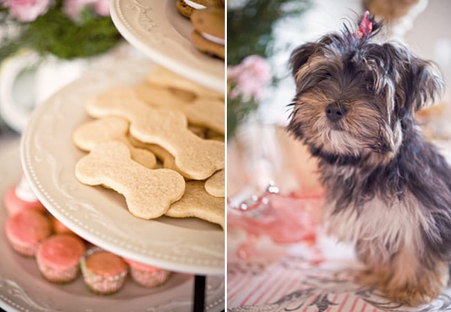 Vintage Puppy Themed Birthday Party The Sweetest Occasion