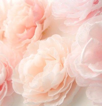 Peach Color Palette Inspiration thumbnail