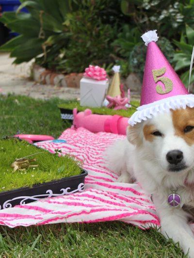 Briar, Lola + Grover's Doggie Birthday Party thumbnail