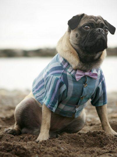 Fashionable Doggie Attire thumbnail