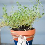DIY Potted Herb Favors