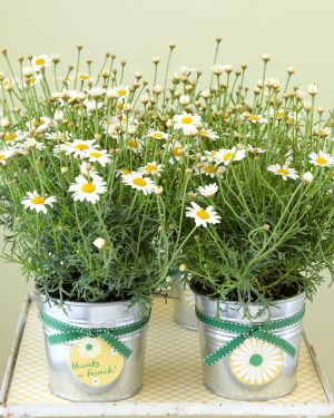 Daisy Planter Favors