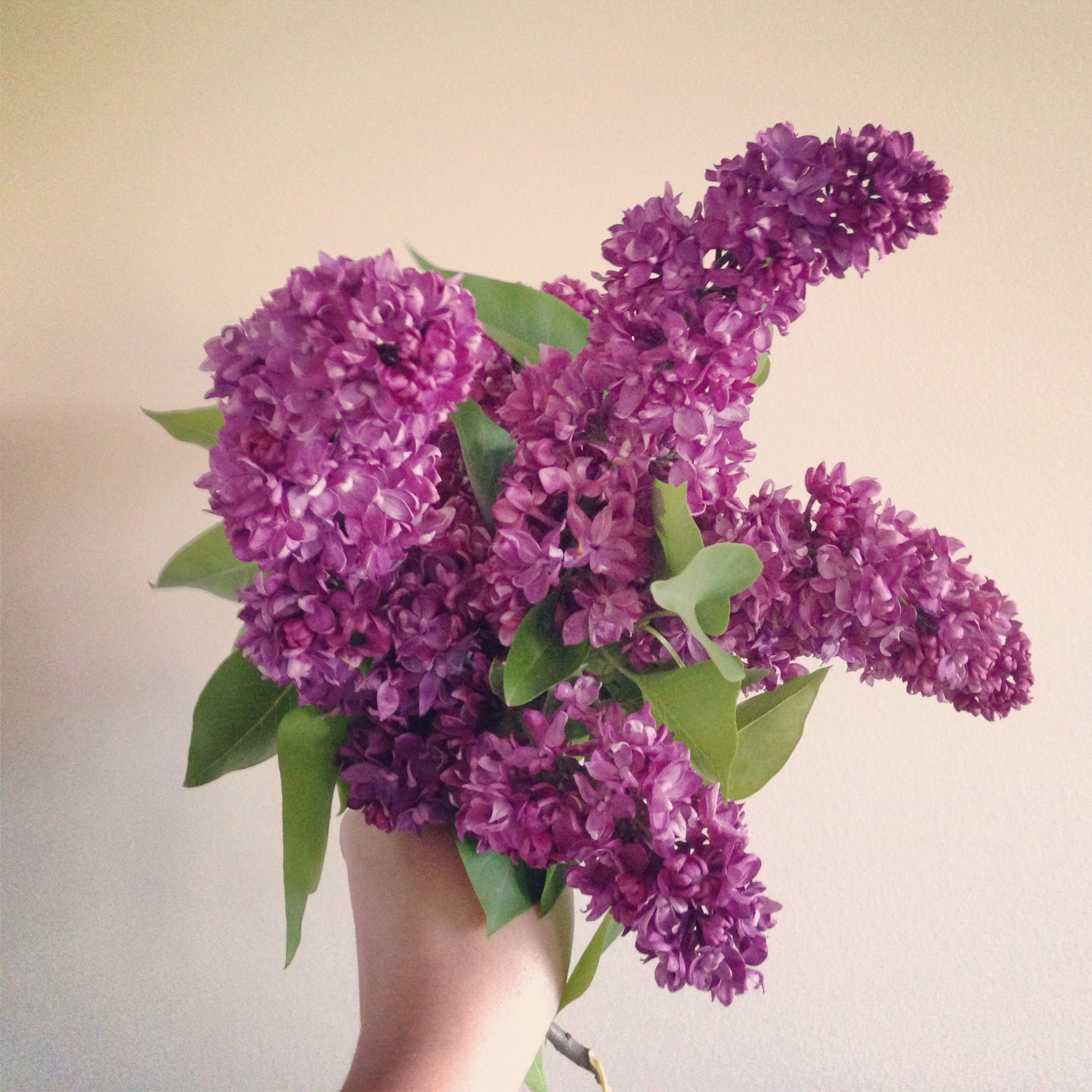 Lilacs | The Sweetest Occasion