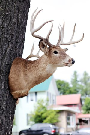 Deer Mount | Photo by Cyd Converse of The Sweetest Occasion