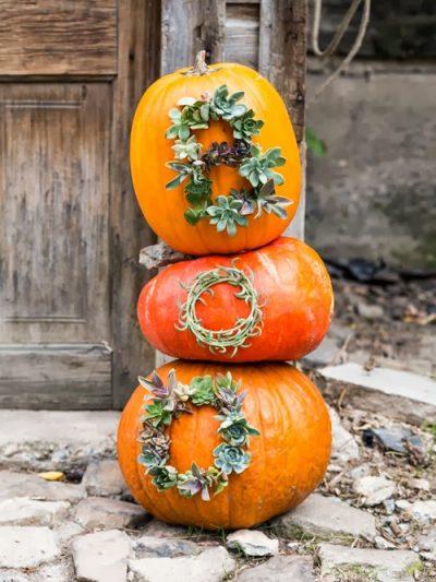 10 Favorite No Carve Pumpkin Ideas thumbnail