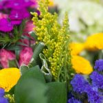 Tips + Tricks: How to Keep Flowers Fresh