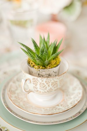 Succulent Tea Cup from @cydconverse