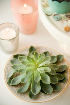 Easter Succulents from @cydconverse