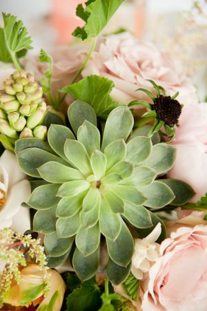 Succulents and Roses from @cydconverse