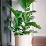Loving Pretty House Plants