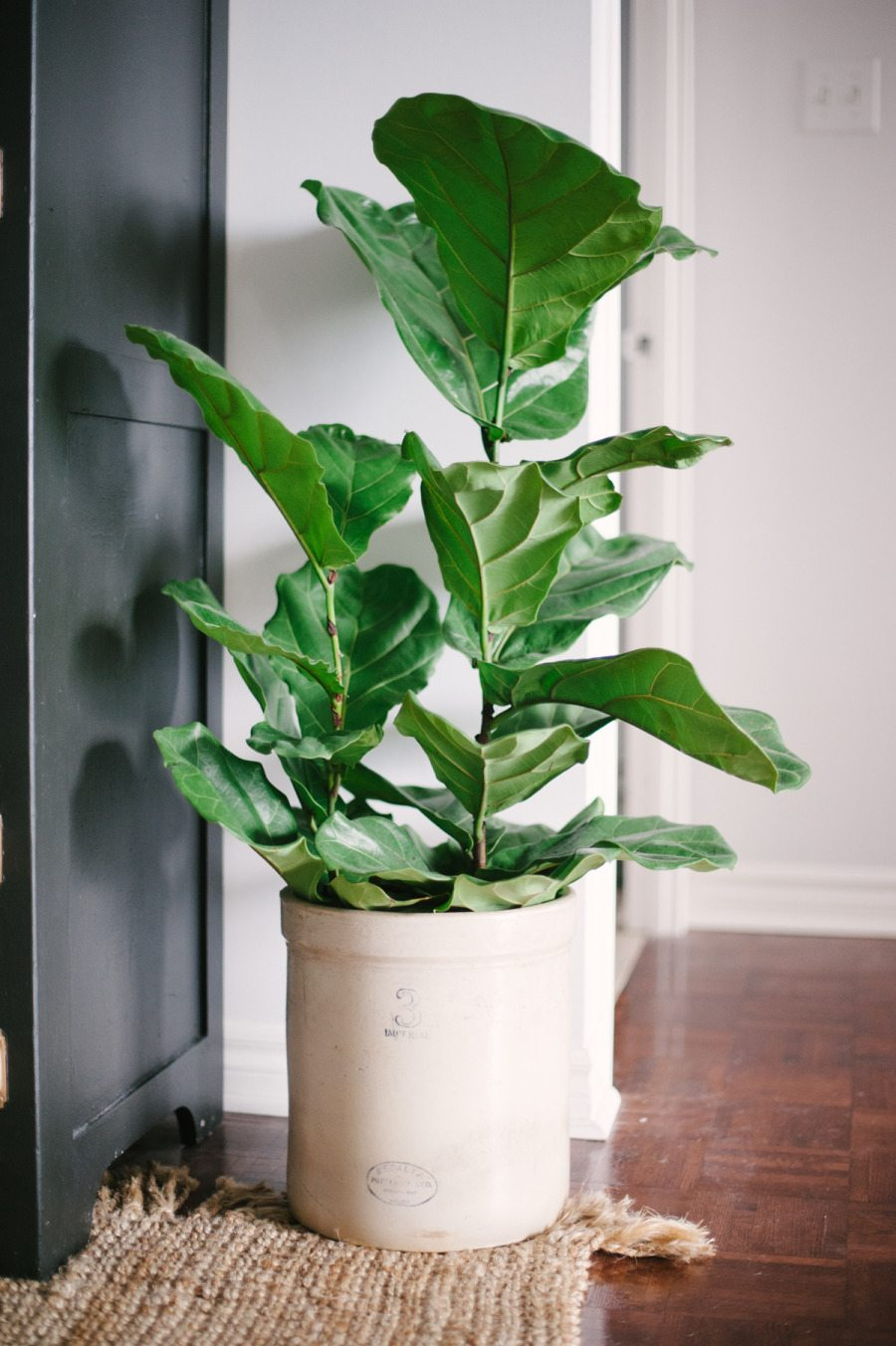 Loving pretty house plants the sweetest occasion - Tall house plants ...