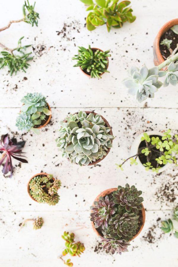 Pretty Little Succulents
