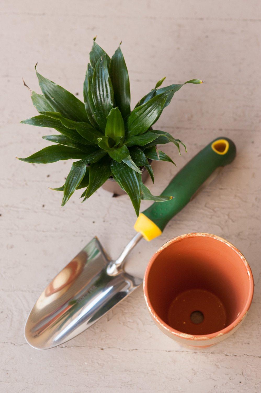 diy gold leaf planters the sweetest occasion. Black Bedroom Furniture Sets. Home Design Ideas