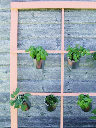 DIY Trellis Herb Garden thumbnail