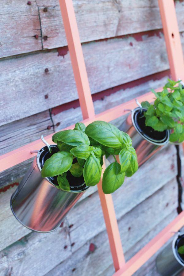 DIY Trellis Herb Garden by @cydconverse for @valsparpaint