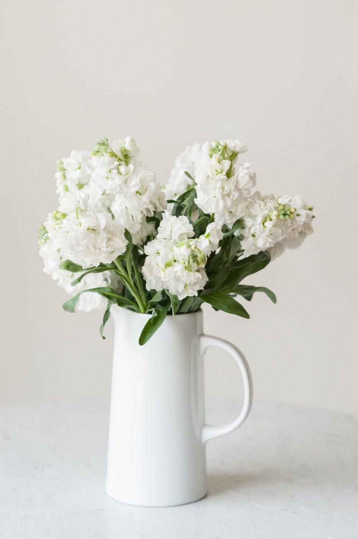 Eleletsitz stock flower images stock flower mightylinksfo